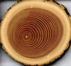 Medžio produkcija