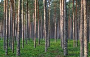 Miškų paslaugos